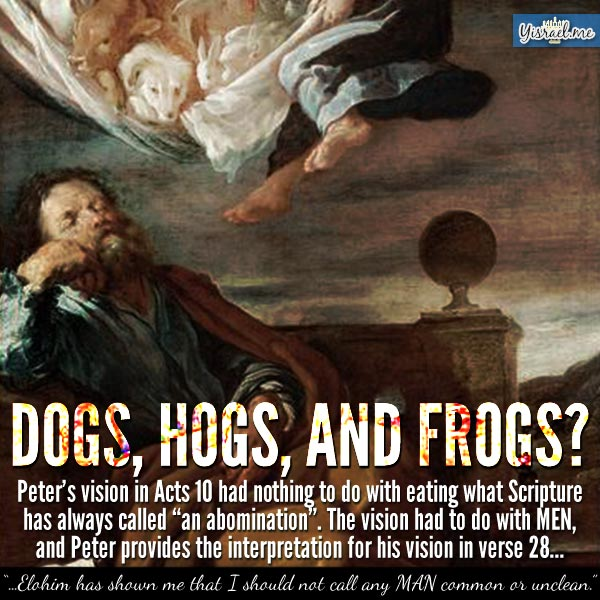 dogs-hogs-frogs